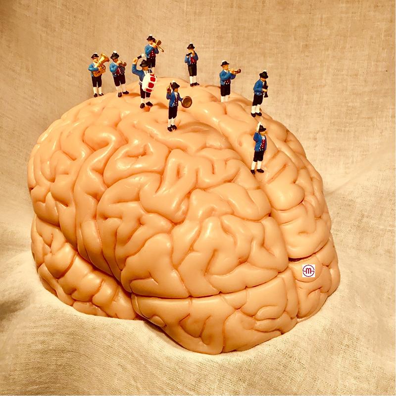 Gehirn - Energie - Natur - Coaching - Gehirnkinesiologie
